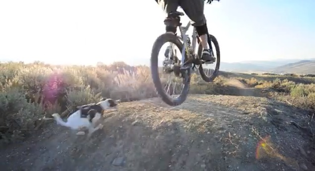 Cachorro pratica mountain bike com dono ciclista f4305e71b2